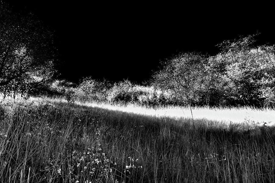 Sun Streaks in the Grass by David Patterson