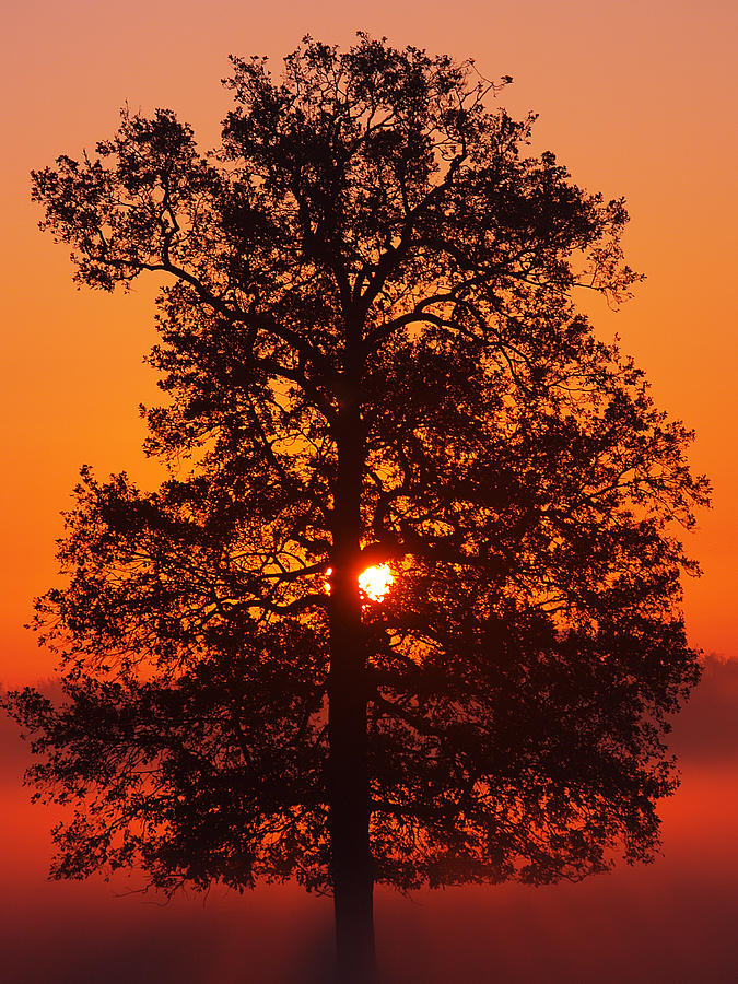 Sun Tree two by Luc Van de Steeg