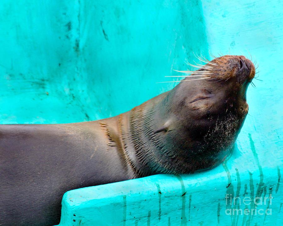 Sunbathing Galapagos Sea Lion by Catherine Sherman