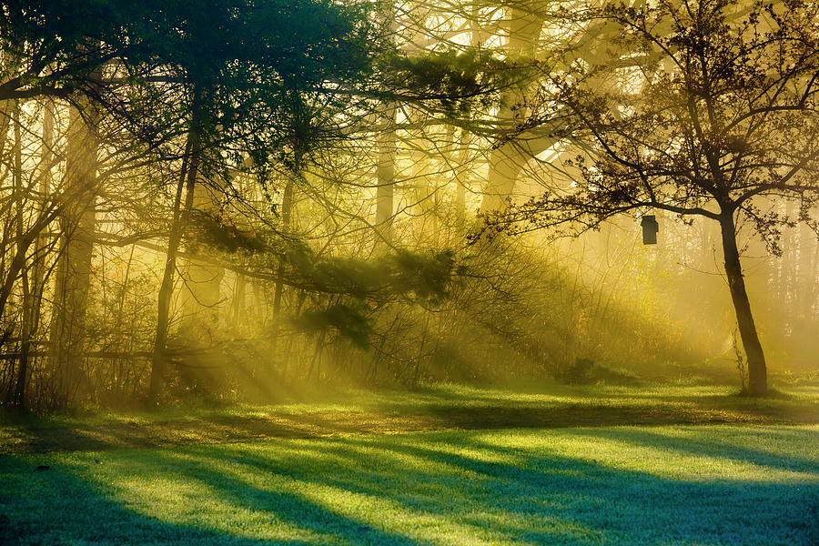 Sunbeams And Fog Mingle In The Yard At Photograph by Jamesbrey
