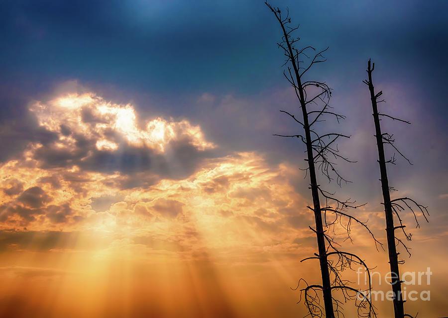 Sunbeams by DHEERAJ MUTHA