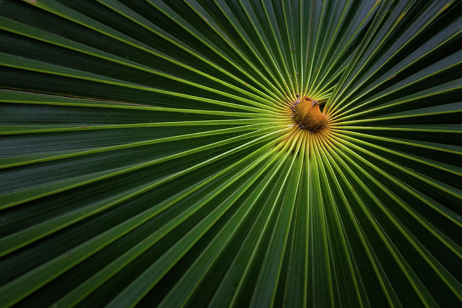Tropical Photograph - Sunburst by Brian Jackson