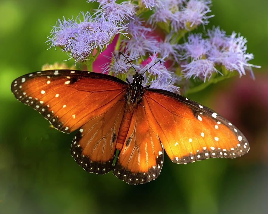 Sunday Afternoon In My Garden by Harriet Feagin