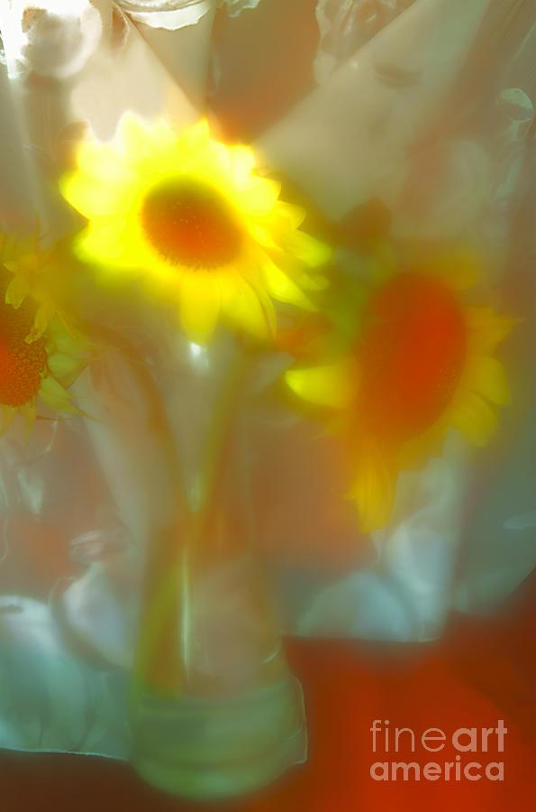 Sunflower # 16. Photograph