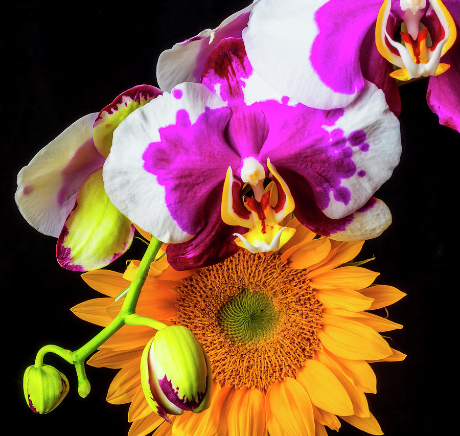 Pink Photograph - Sunflower And Purple White Orchid by Garry Gay