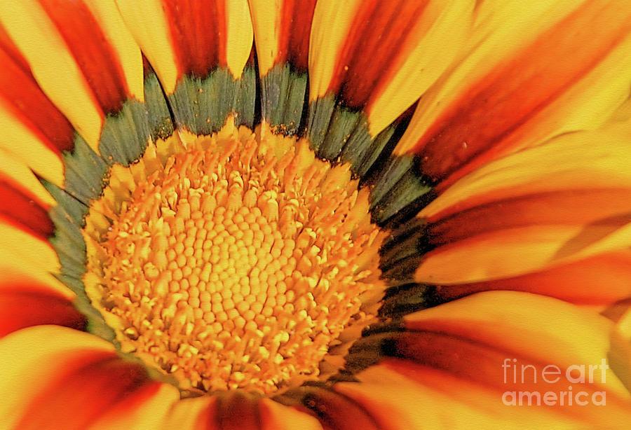 Sunflower Center by Elaine Manley