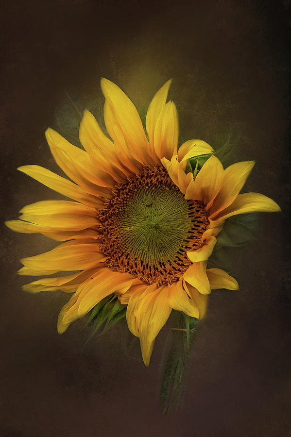 Sunflower Dreams by Kelley Parker