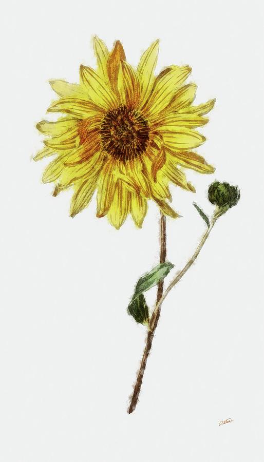 Sunflower - DWP1952018 by Dean Wittle