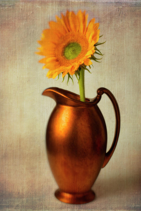 Pitchers Photograph - Sunflower In Bronze Pitcher by Garry Gay