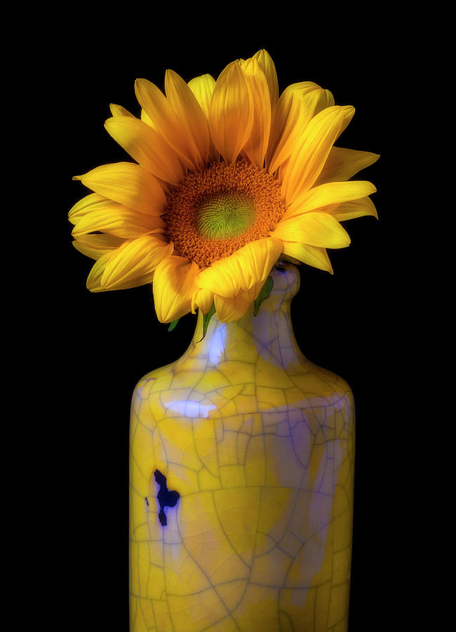 Single Photograph - Sunflower In Cracked Vase by Garry Gay