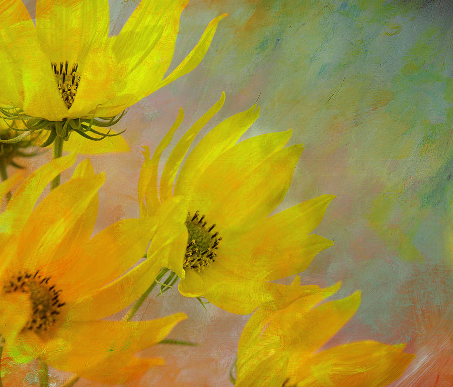 Sunflower by Linde Townsend