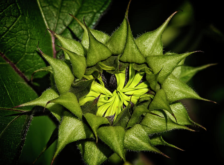 sunflower nest by Wayne Sherriff