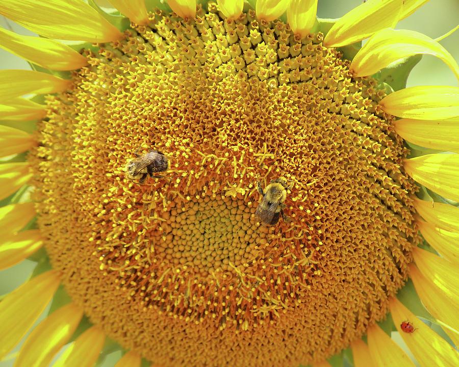 Sunflower Smile by Angel Sharum