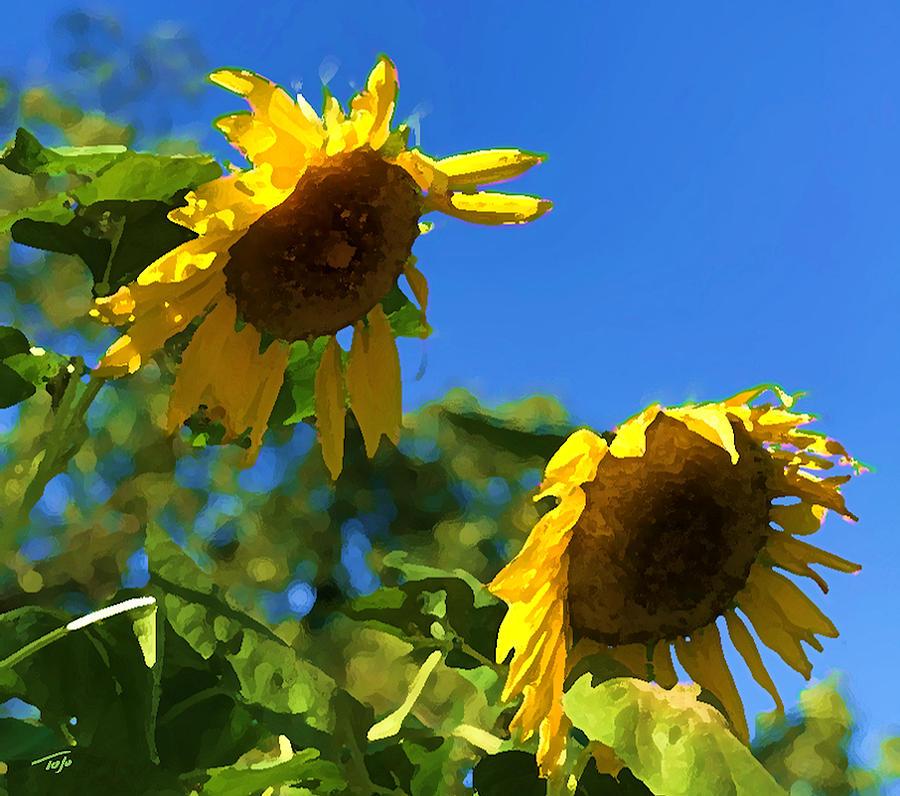 Sunflower Vox by Tom Johnson
