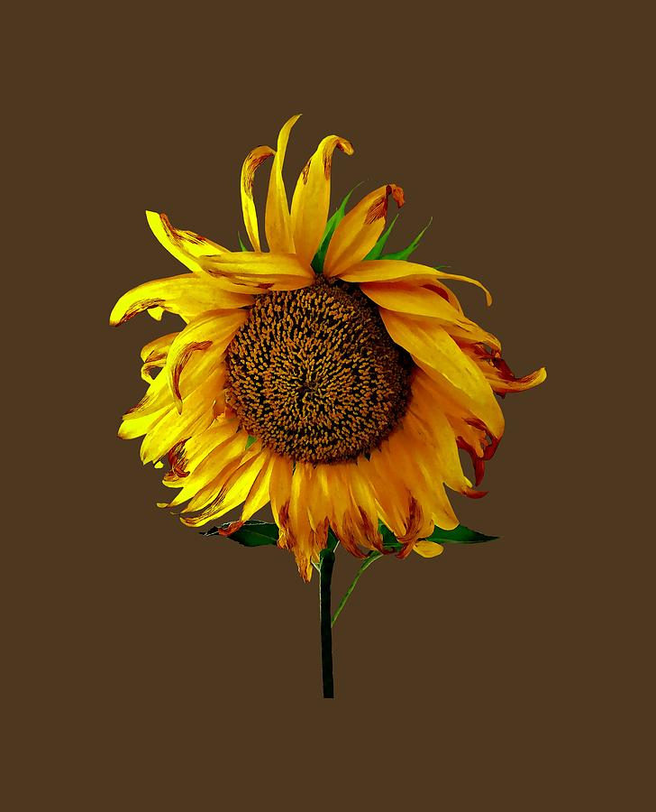Sunflower With Center Part by Susan Savad