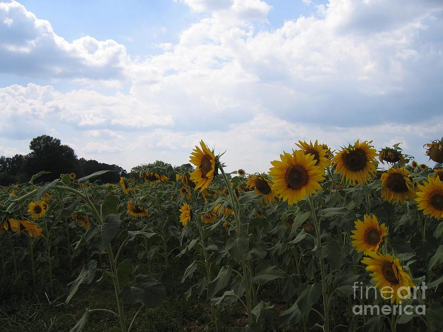 Sunflowers Cloudy Blue Sky by Marilyn Nolan-Johnson by Marilyn Nolan-Johnson