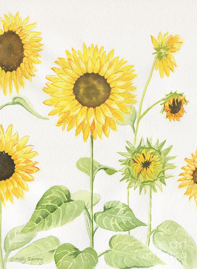 Sunflowers Garden Painting By Melly Terpening