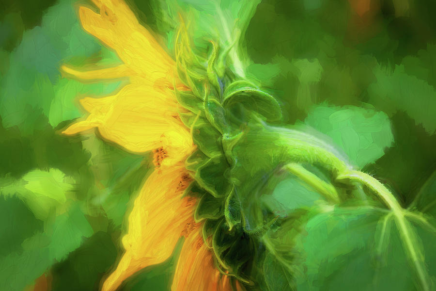 Sunflowers  Helianthus 144 by Rich Franco