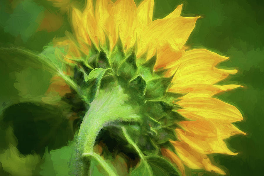 Sunflowers  Helianthus 151 by Rich Franco