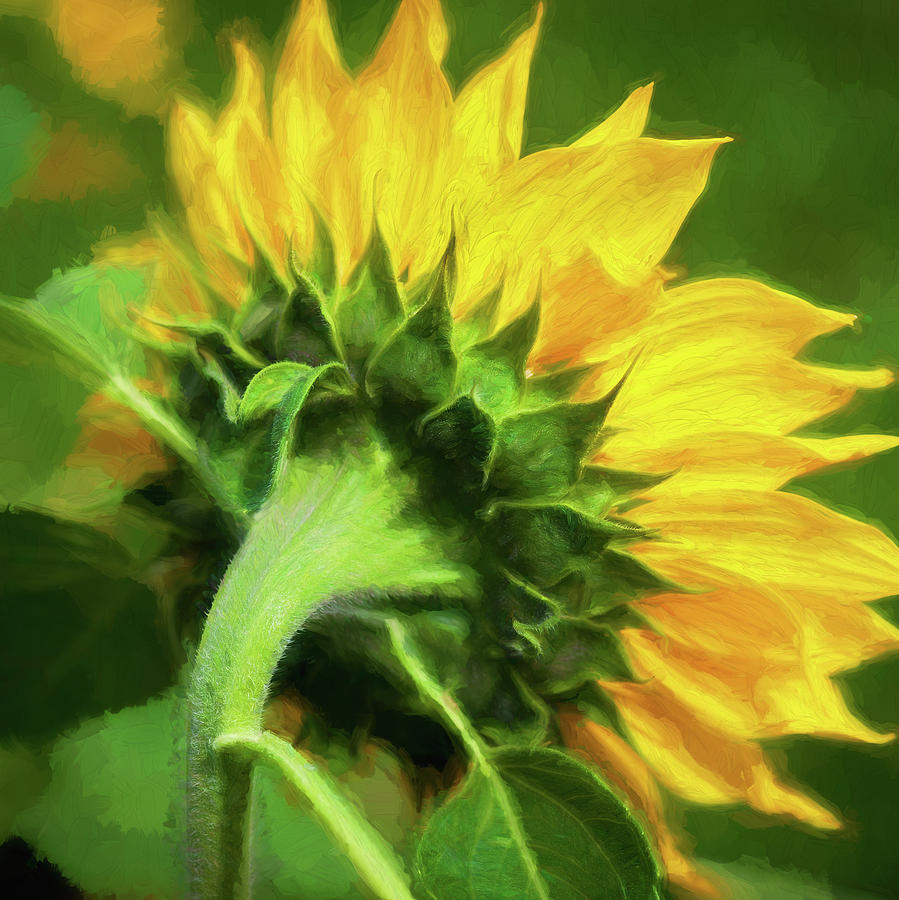 Sunflowers  Helianthus 153 by Rich Franco