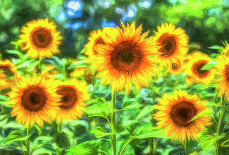 Sunflowers  Memories Photograph