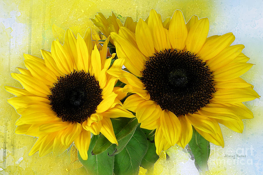 Sunflowers by Morag Bates