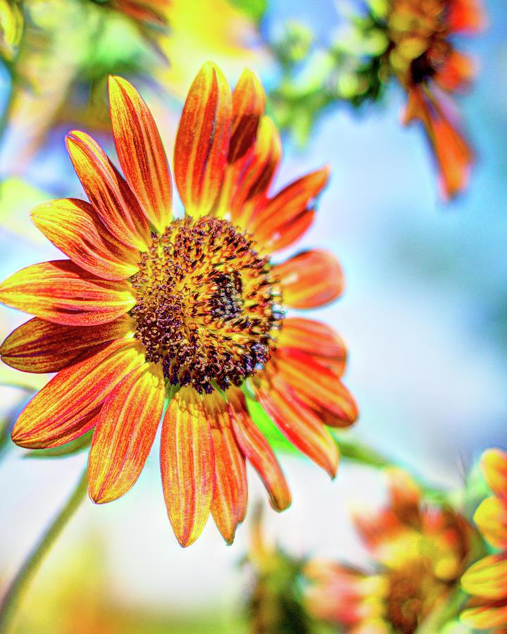 Sunflowers by Wade Brooks