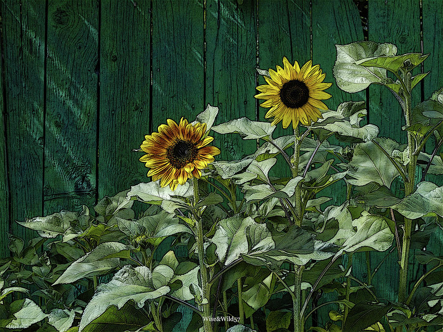 Sunflowers by WiseWild57