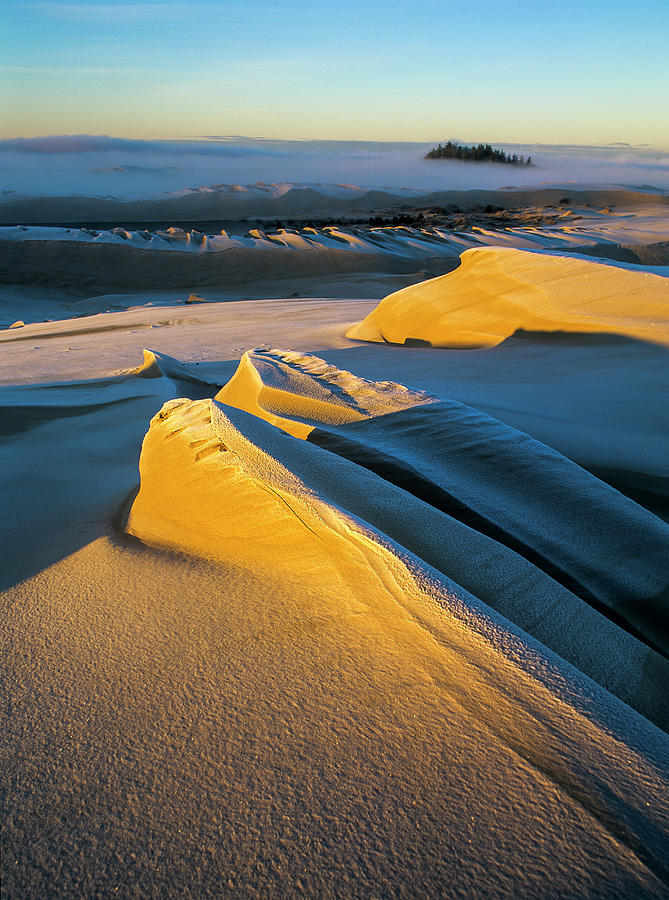 Sunlight on Sand by Robert Potts