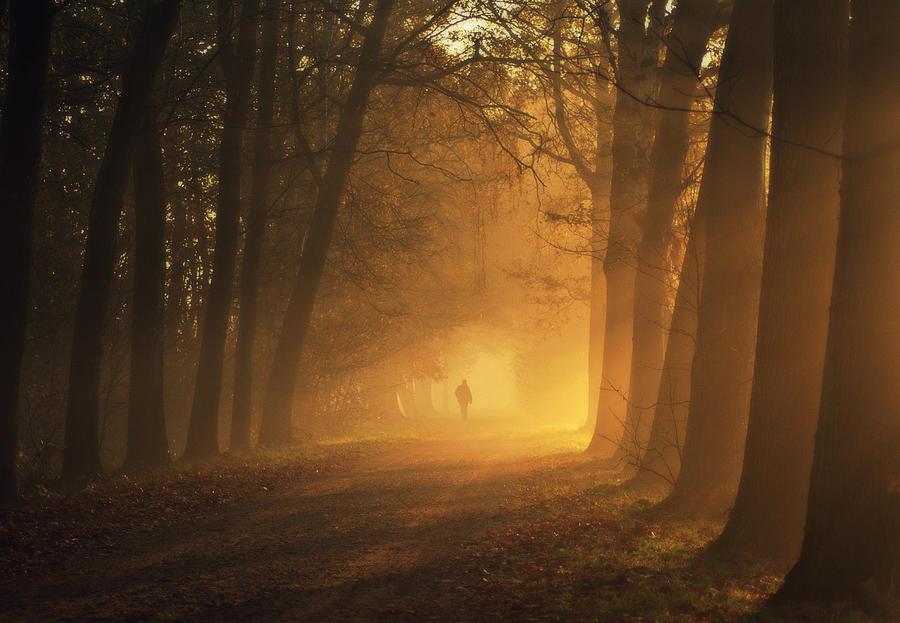 Sunlight Passing Through Trees In Autumn Photograph by Bob Van Den Berg Photography