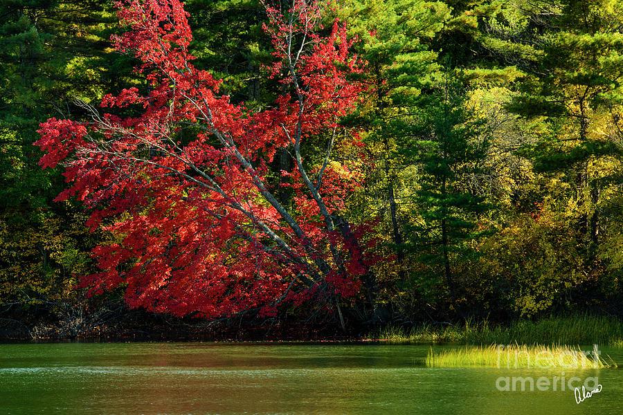Sunlight Red Tree Photograph