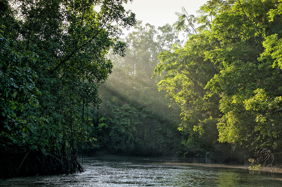 Sunlight Shining Through Trees On River Photograph by Brasil2