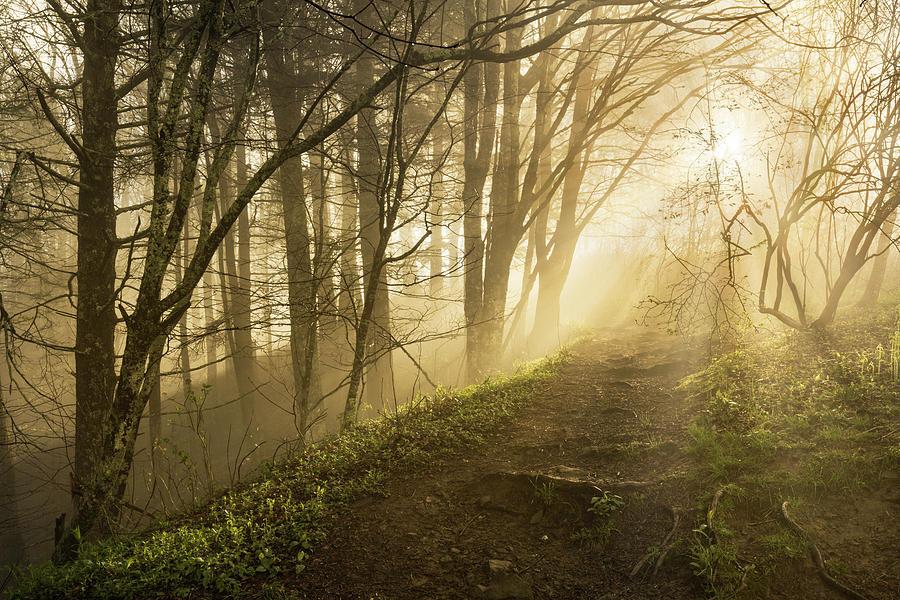 Adam Jones Photograph - Sunlight Streaming Through Fog by Adam Jones