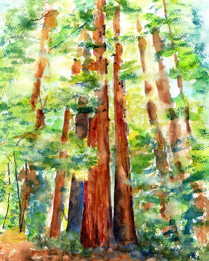 Sunlight through Redwood Trees by Carlin Blahnik CarlinArtWatercolor