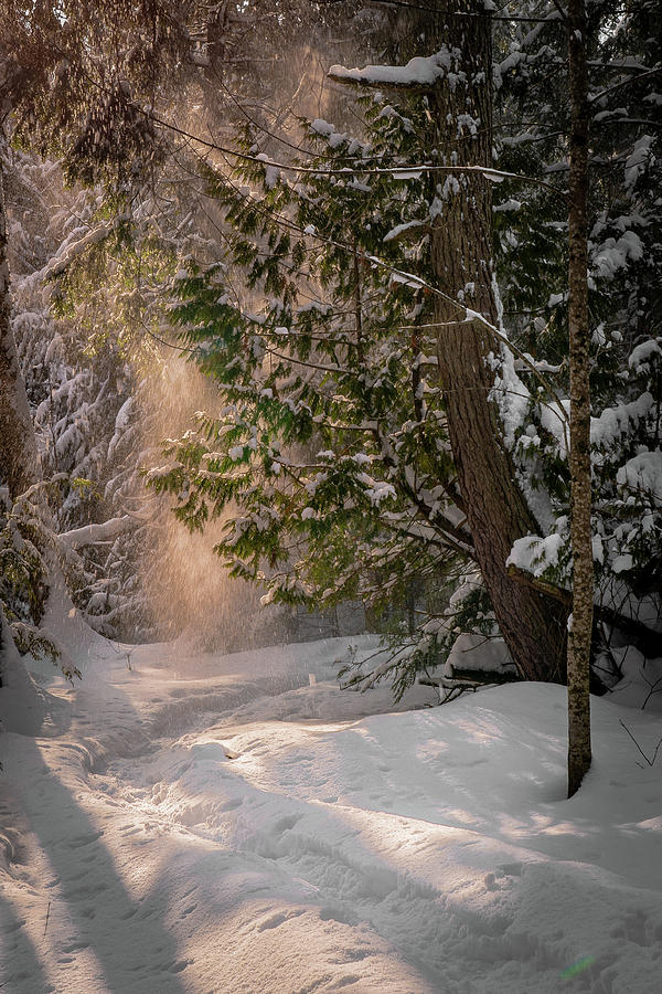 sunlit powder by David Heilman