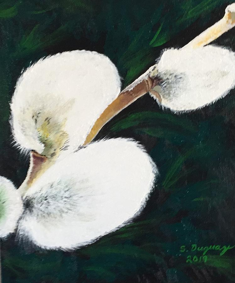Sunlit Pussy Willow by Sharon Duguay