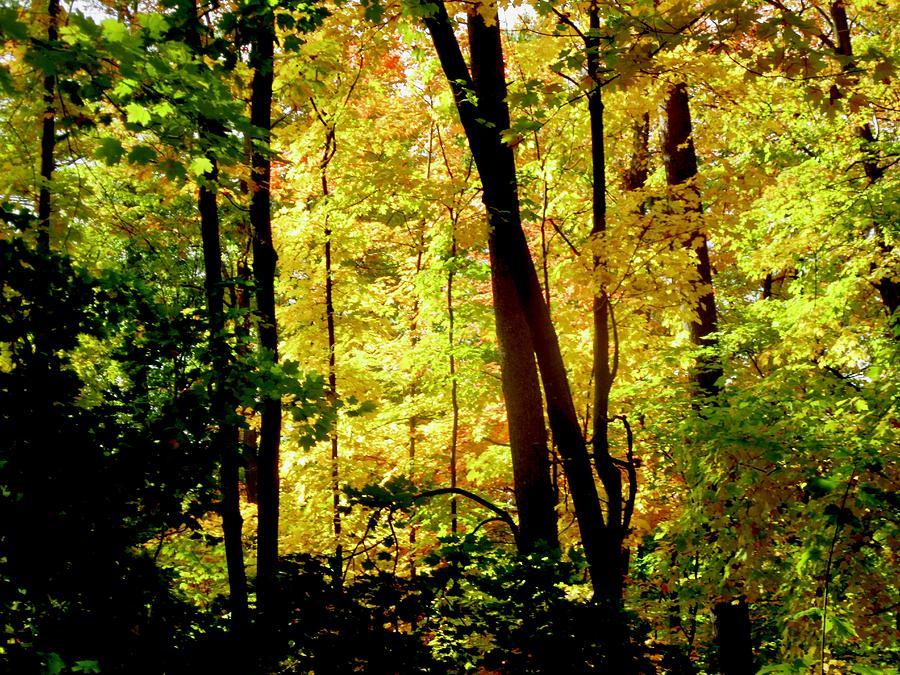 Sunlit Trees by Stephanie Moore