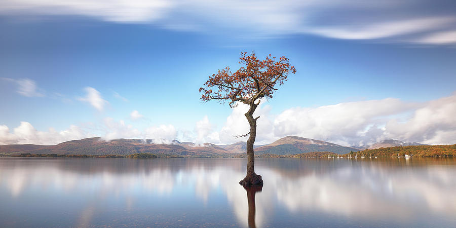 Lone Tree Photograph - Sunny afternoon on Loch Lomond by Grant Glendinning