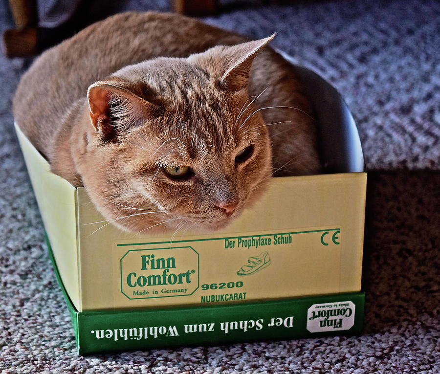 Sunny Cat I fits I sits by Janis Nussbaum Senungetuk