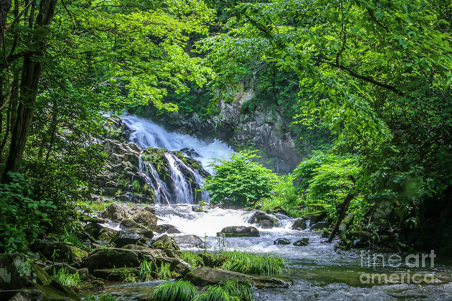 Sunny Day Waterfall by Tom Claud