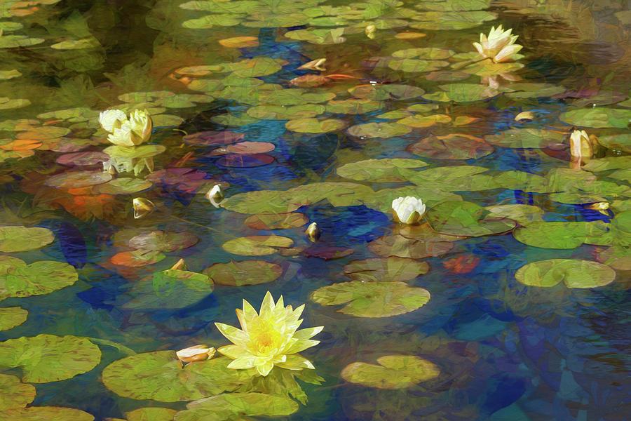 Sunny Lily Pond by Bonnie Follett