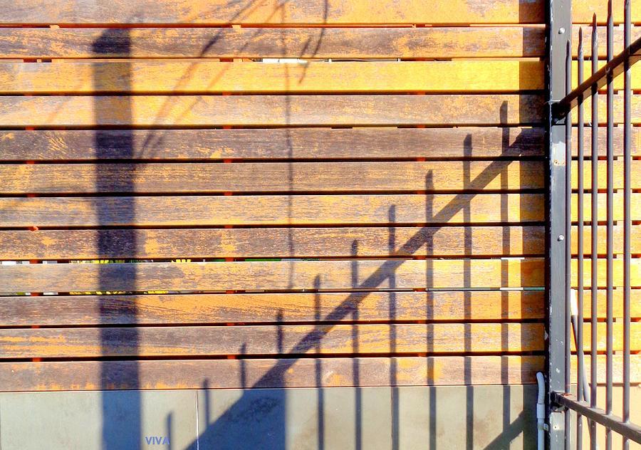 Sunny Morning Shadows by VIVA Anderson