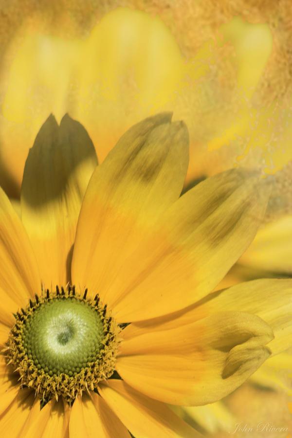 Sunny Side Up by John Rivera