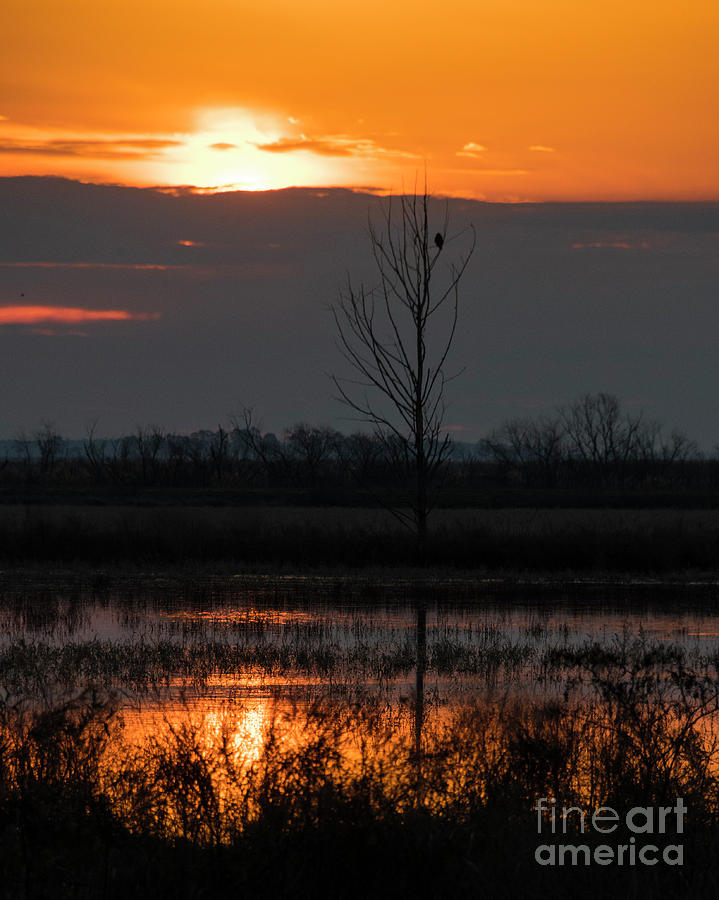 Sunrise at Chincoteauge NWR No. 4 by John Greco