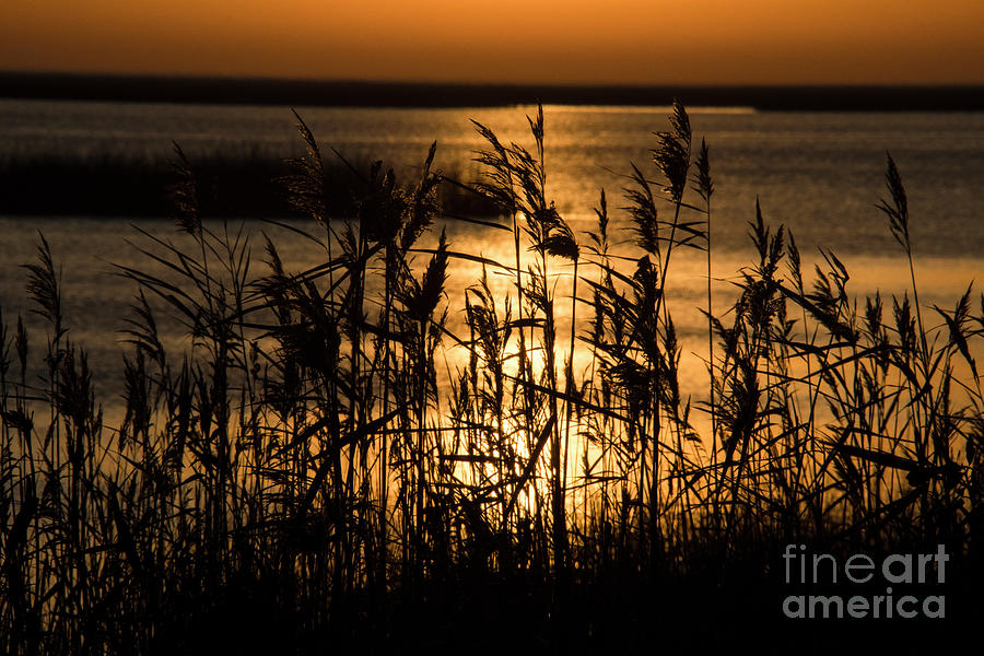 Sunrise Bombay Hook NWR  by John Greco