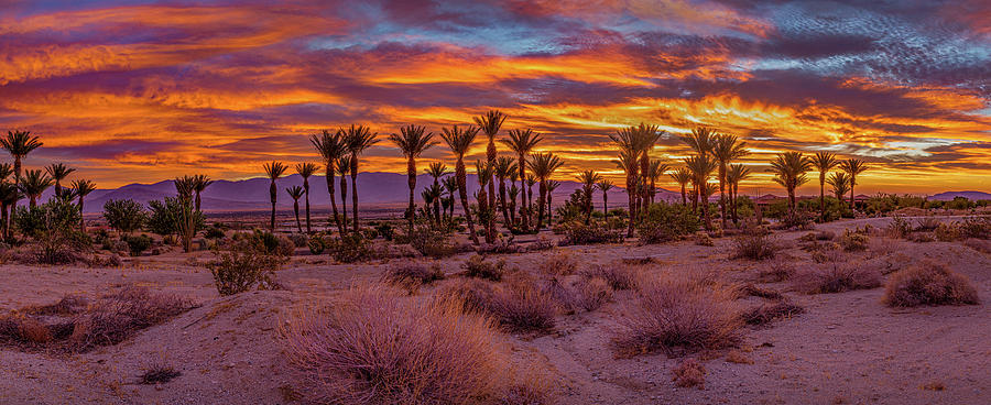 Sunrise - Borrego Springs by Peter Tellone