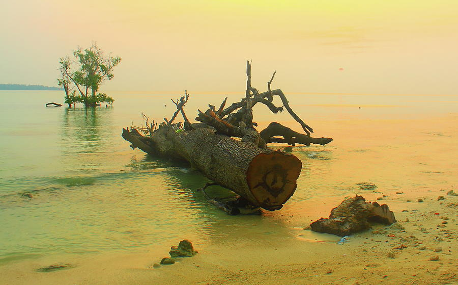 Sunrise, Havelock Island,  Andaman Photograph by Mark Hollowell
