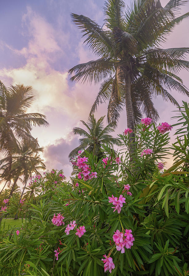 Sunrise in the Palms by Darren White