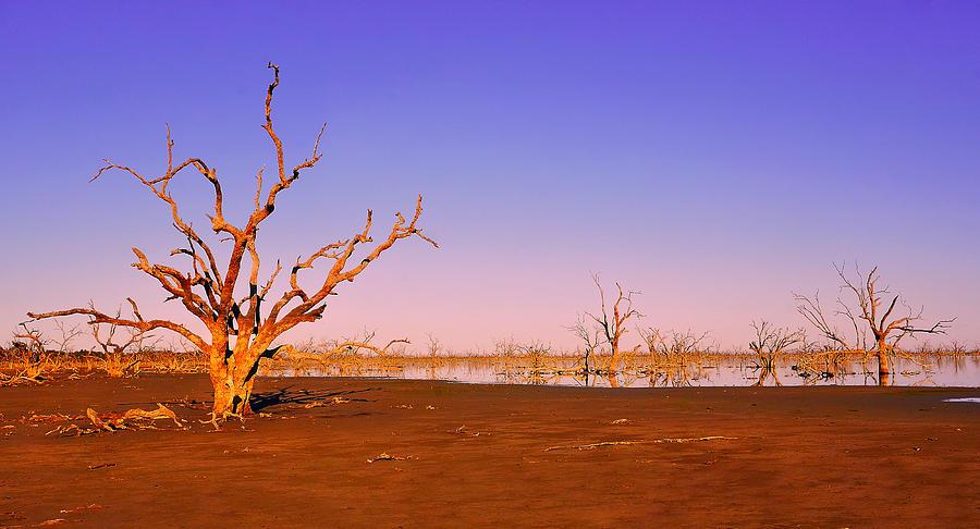 Sunrise on Mud Flats - Pamamaroo Lake #2 by Lexa Harpell