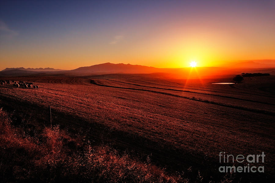 Rural Photograph - Sunrise Over Cultivated Farmland Cape by Johan Swanepoel